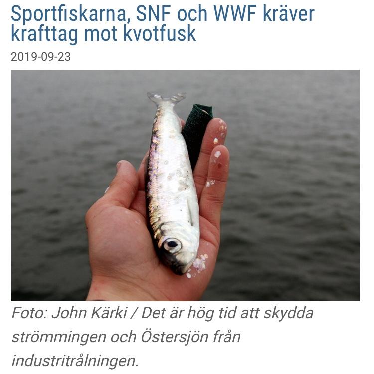 Nyhet: Sportfiskarna, SNF och WWF kräver krafttag mot kvotfusk