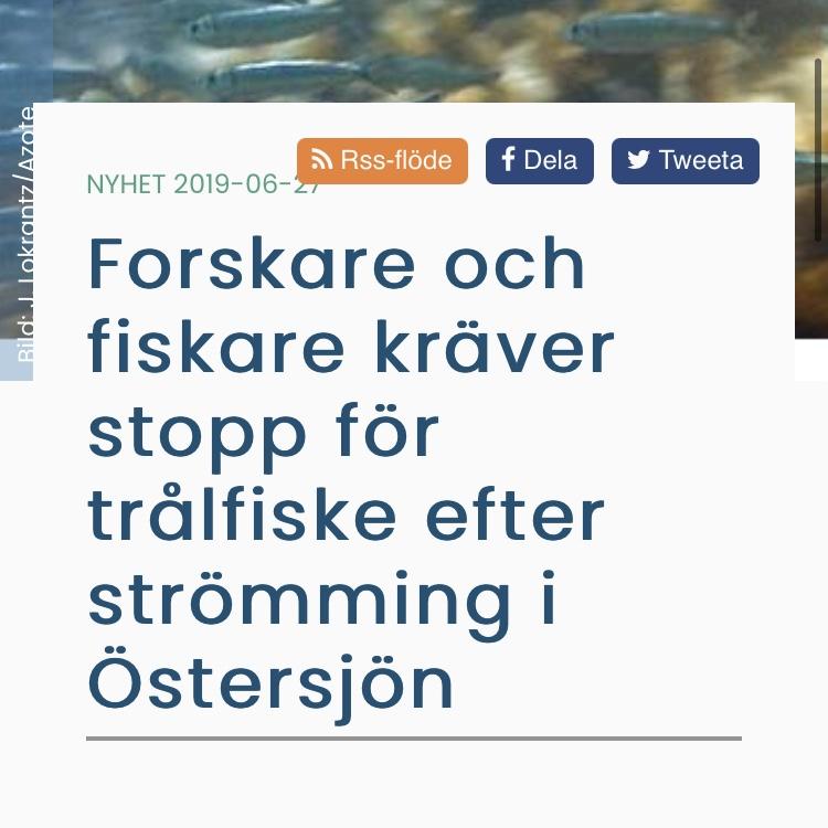Havet.nu Forskare och fiskare kräver stopp för trålfiske efter strömming i Östersjön