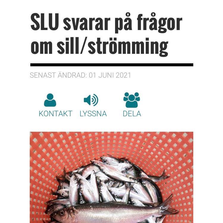 SLU svarar på frågor om sill/strömming