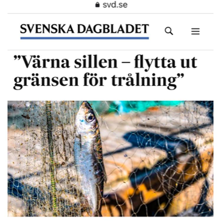 """SVD debatt: Miljön i Östersjön """"Värna sillen – flytta ut gränsen för trålning"""""""